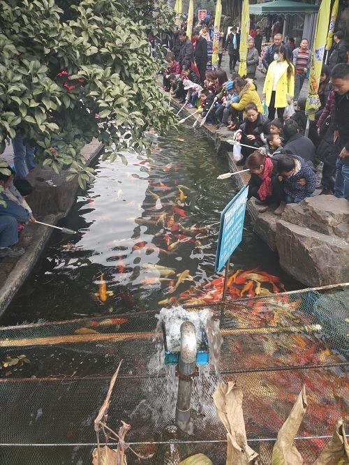 (写真5)崇安寺生活歩行街、鯉に餌をやる人たち(江蘇省・無錫市)